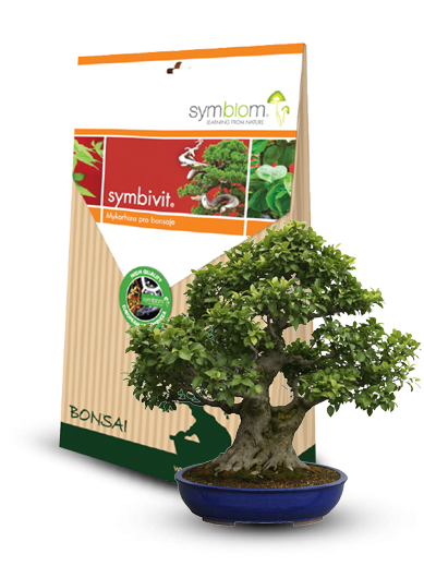 Symbivit <span>Bonsai</span>